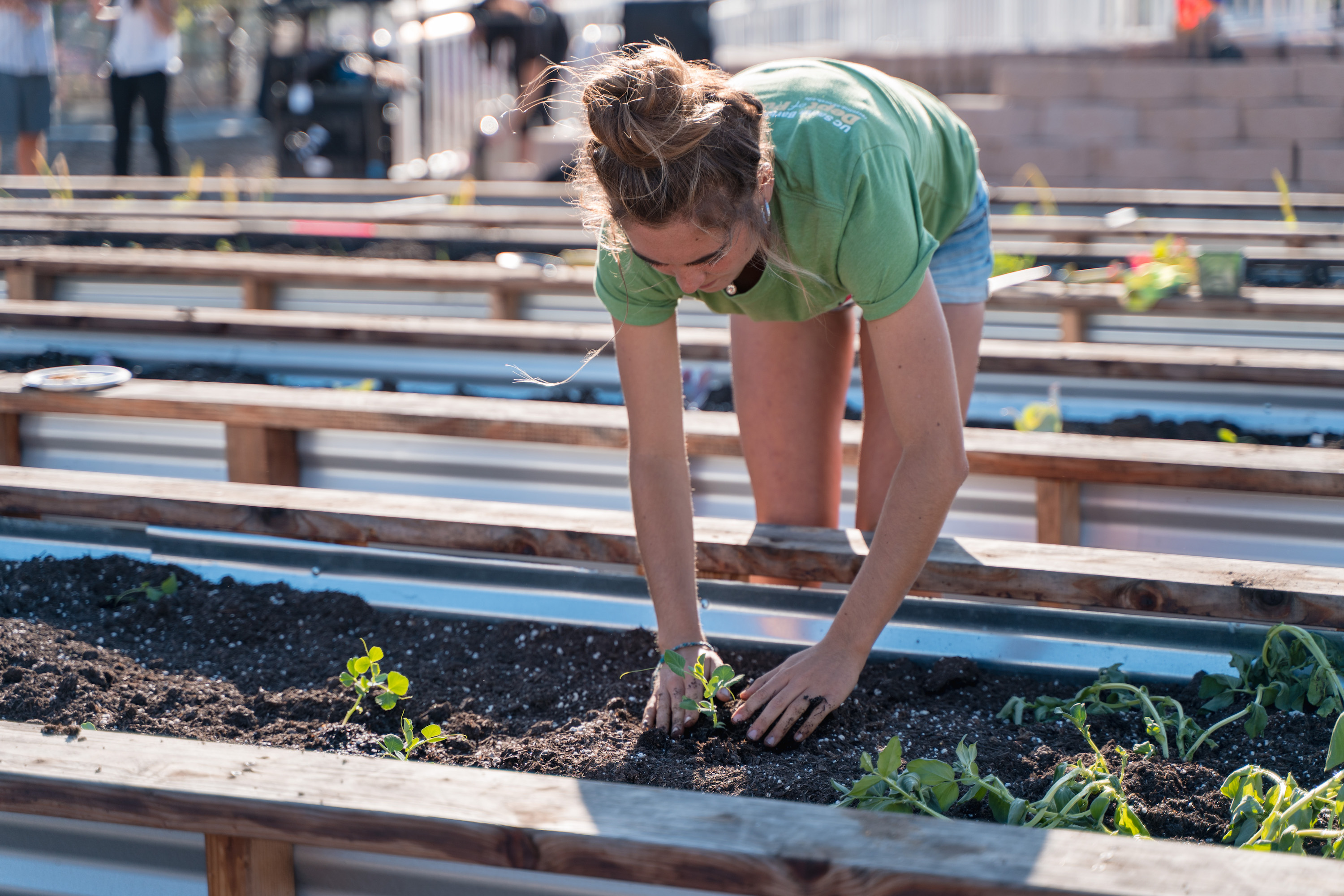 Edible Campus Program's Student Farm